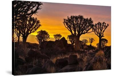Africa, Namibia, Keetmanshoop, sunset at the Quiver tree Forest at the Quiver tree Forest Rest Camp-Hollice Looney-Stretched Canvas Print