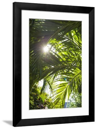French West Indies, St-Barthelemy. Gustavia, palm tree-Walter Bibikow-Framed Photographic Print