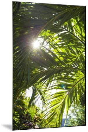 French West Indies, St-Barthelemy. Gustavia, palm tree-Walter Bibikow-Mounted Photographic Print