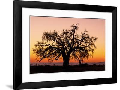 Sunrise and silhouetted lone tree Namib Desert Namibia Sossusvlei-Darrell Gulin-Framed Photographic Print