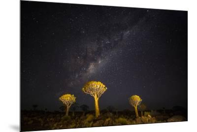 Africa, Namibia, Keetmanshoop. Milky Way over the Quiver tree Forest-Hollice Looney-Mounted Photographic Print