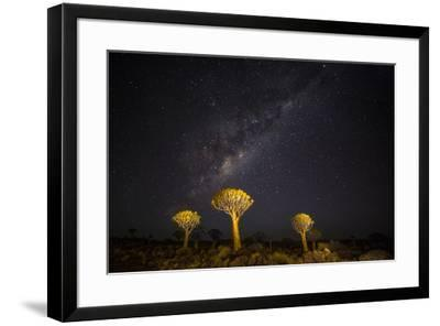Africa, Namibia, Keetmanshoop. Milky Way over the Quiver tree Forest-Hollice Looney-Framed Photographic Print