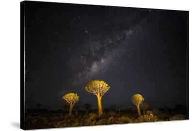 Africa, Namibia, Keetmanshoop. Milky Way over the Quiver tree Forest-Hollice Looney-Stretched Canvas Print