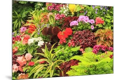 Summer flowers in a garden near Victoria, British Columbia-Stuart Westmorland-Mounted Photographic Print