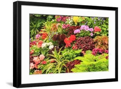 Summer flowers in a garden near Victoria, British Columbia-Stuart Westmorland-Framed Photographic Print