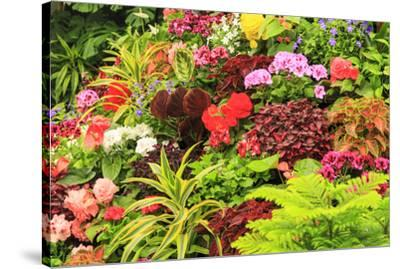 Summer flowers in a garden near Victoria, British Columbia-Stuart Westmorland-Stretched Canvas Print