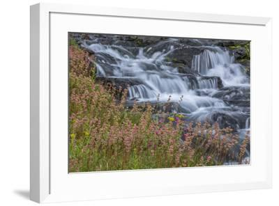 Canada, British Columbia, Selkirk Mountains. Leatherleaf saxifrage flowers and cascading stream.-Jaynes Gallery-Framed Photographic Print