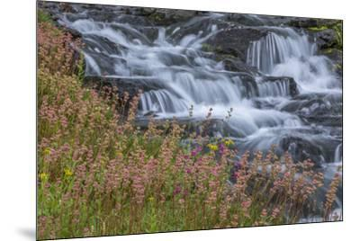 Canada, British Columbia, Selkirk Mountains. Leatherleaf saxifrage flowers and cascading stream.-Jaynes Gallery-Mounted Photographic Print