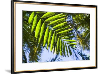 U.S. Virgin Islands, St. Thomas. St. Peter, tropical vegetation-Walter Bibikow-Framed Photographic Print