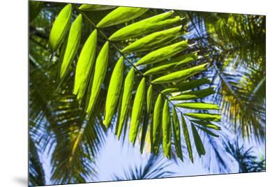 U.S. Virgin Islands, St. Thomas. St. Peter, tropical vegetation-Walter Bibikow-Mounted Photographic Print