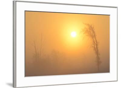 Canada, Manitoba, Winnipeg. Trees in fog at sunrise.-Jaynes Gallery-Framed Photographic Print