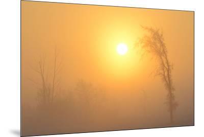 Canada, Manitoba, Winnipeg. Trees in fog at sunrise.-Jaynes Gallery-Mounted Photographic Print
