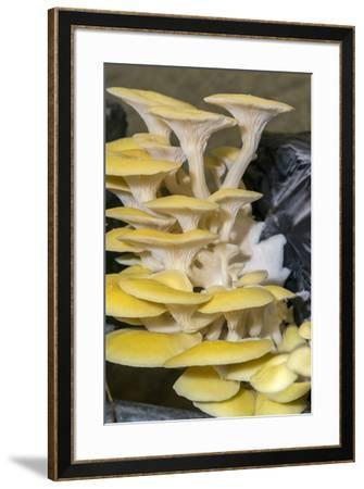 Mushrooms, Saumur, Loire Valley, France-Jim Engelbrecht-Framed Photographic Print