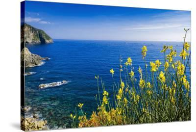 Wildflowers on the Via dell'Amore, Riomaggiore, Cinque Terre, Liguria, Italy-Russ Bishop-Stretched Canvas Print
