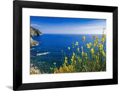 Wildflowers on the Via dell'Amore, Riomaggiore, Cinque Terre, Liguria, Italy-Russ Bishop-Framed Photographic Print