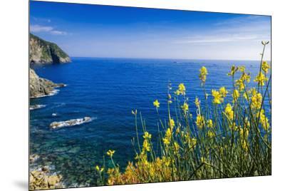Wildflowers on the Via dell'Amore, Riomaggiore, Cinque Terre, Liguria, Italy-Russ Bishop-Mounted Photographic Print