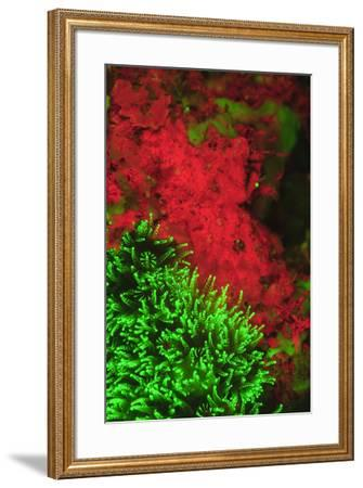 Natural occurring Fluorescence emitted at night using special UV blocking filters. carpeting Cup Co-Stuart Westmorland-Framed Photographic Print