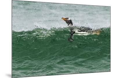 Gentoo Penguin swimming, Falkland Islands-Adam Jones-Mounted Photographic Print