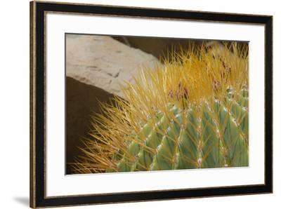 Baja, Gulf of California, Mexico. Close-up of barrel cactus.-Janet Muir-Framed Photographic Print