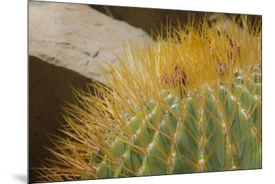 Baja, Gulf of California, Mexico. Close-up of barrel cactus.-Janet Muir-Mounted Photographic Print
