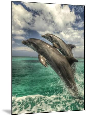 Bottlenose Dolphins, Caribbean Sea, Roatan, Bay Islands, Honduras-Stuart Westmorland-Mounted Photographic Print