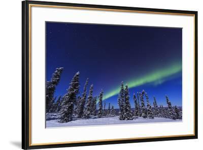 Aurora borealis, Northern Lights near Fairbanks, Alaska-Stuart Westmorland-Framed Photographic Print