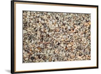Shell pattern on beach, Boca Grande, Florida.-Adam Jones-Framed Photographic Print