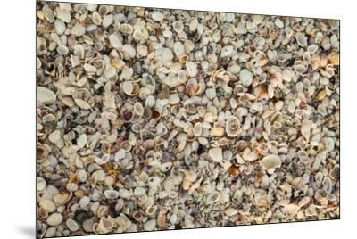 Shell pattern on beach, Boca Grande, Florida.-Adam Jones-Mounted Photographic Print