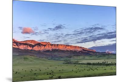 Beef cattle grazing below Walling Reef on the Rocky Mountain Front at sunrise near Dupuyer, Montana-Chuck Haney-Mounted Photographic Print