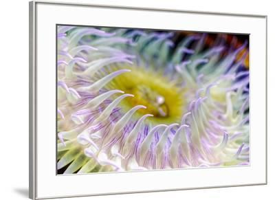 Anemone tentacles, Oregon Coast Aquarium, Newport, Oregon-Adam Jones-Framed Photographic Print