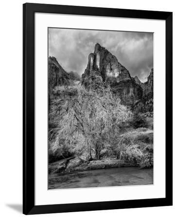 USA, Utah, Zion National Park. Cottonwood in winter-Ann Collins-Framed Photographic Print