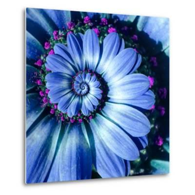 Blue Camomile Daisy Flower Spiral Abstract Fractal Effect Pattern Background. Blue Violet Navy Flow--Metal Print