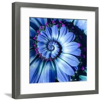 Blue Camomile Daisy Flower Spiral Abstract Fractal Effect Pattern Background. Blue Violet Navy Flow--Framed Photographic Print