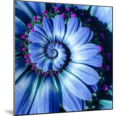 Blue Camomile Daisy Flower Spiral Abstract Fractal Effect Pattern Background. Blue Violet Navy Flow--Mounted Photographic Print