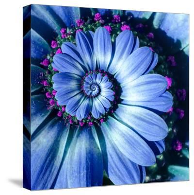 Blue Camomile Daisy Flower Spiral Abstract Fractal Effect Pattern Background. Blue Violet Navy Flow--Stretched Canvas Print