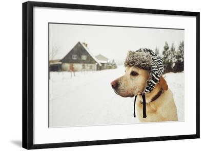 Labrador Retriever with Cap on His Head in Winter-Jaromir Chalabala-Framed Photographic Print