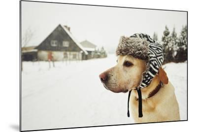Labrador Retriever with Cap on His Head in Winter-Jaromir Chalabala-Mounted Photographic Print