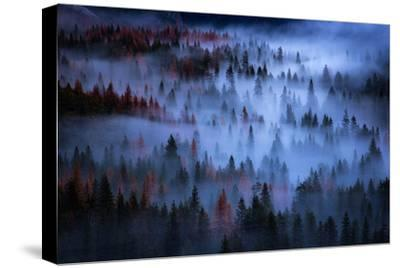 Ethereal Mesmer Fog & Light Trees Sark Yosemite Winter Storm Valley-Vincent James-Stretched Canvas Print