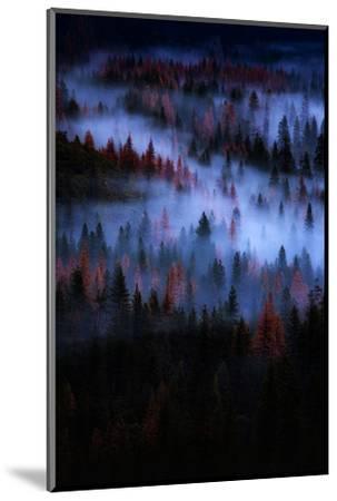 Mesmer Portrait Fog & Light Trees Sark Yosemite Winter Storm Valley-Vincent James-Mounted Photographic Print