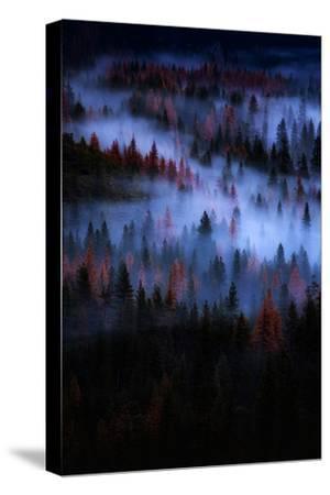 Mesmer Portrait Fog & Light Trees Sark Yosemite Winter Storm Valley-Vincent James-Stretched Canvas Print