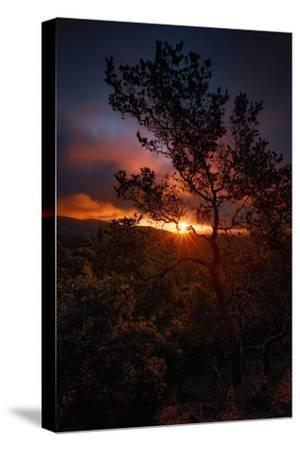 Manzanita Morning Magic Sun Star Oakland Hills Bay Area-Vincent James-Stretched Canvas Print