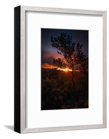 Manzanita Morning Magic Sun Star Oakland Hills Bay Area-Vincent James-Framed Photographic Print