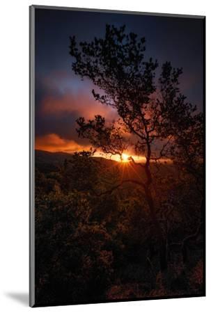 Manzanita Morning Magic Sun Star Oakland Hills Bay Area-Vincent James-Mounted Photographic Print