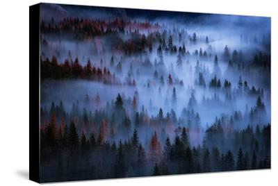 Heavenly Mesmer Fog & Light Trees Sark Yosemite Winter Storm Valley-Vincent James-Stretched Canvas Print