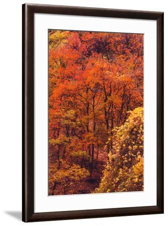 Zion Autymn Color Detail Canyon Fall Magic Southern Utah-Vincent James-Framed Photographic Print