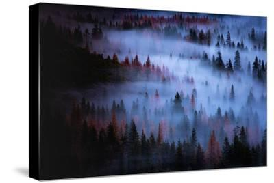 Moody Mesmer Fog & Light Trees Sark Yosemite Winter Storm Valley-Vincent James-Stretched Canvas Print
