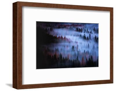 Moody Mesmer Fog & Light Trees Sark Yosemite Winter Storm Valley-Vincent James-Framed Photographic Print
