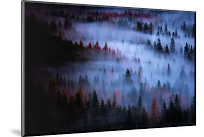 Moody Mesmer Fog & Light Trees Sark Yosemite Winter Storm Valley-Vincent James-Mounted Photographic Print