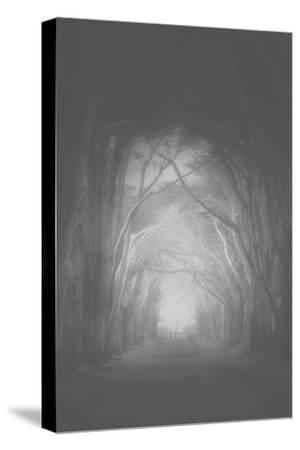 Misty Cypress Road Trees at Point Teyes National Seashore Black White-Vincent James-Stretched Canvas Print