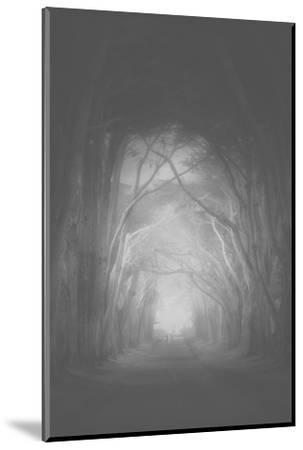 Misty Cypress Road Trees at Point Teyes National Seashore Black White-Vincent James-Mounted Photographic Print